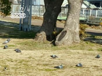 17-02-04-16-43-37-244_deco.jpg